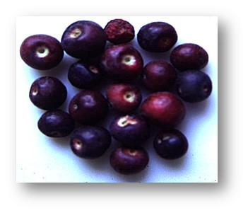 All about Falsa! – The Express Tribune Blog