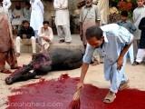 Animal sacrifice: when will we move beyond this barbaric, arcane ritual? PHOTO: FARAH AHED