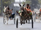 """""""My donkey's well-being guarantees my success so I need to make sure I don't beat him up. PHOTO: AFP"""
