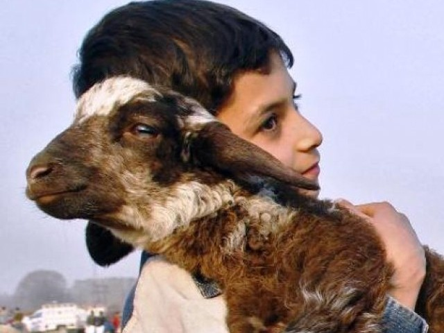 Image result for pakistani boy carrying goat around neck