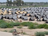 Zarb-e-Azb has already displaced thousands from the war torn region at a time when the refugees affected from previous conflicts and disasters haven't returned to their homes yet. PHOTO: AFP