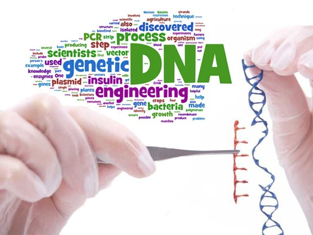 term paper genetic engineering