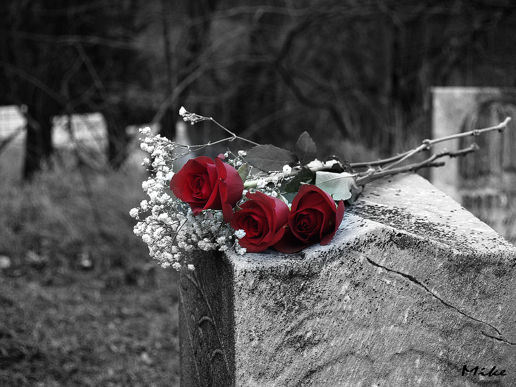 Red Roses On My Grave