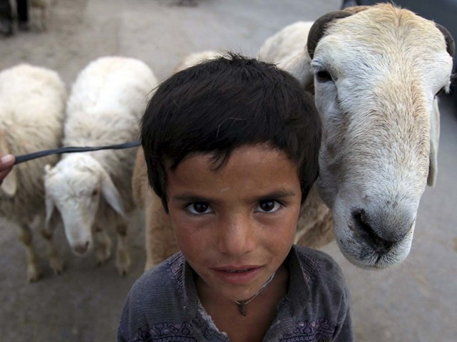 A boy poses with his sheep at an animal market in Islamabad. PHOTO: REUTERS