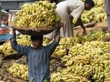 A Pakistani labourer carries a loaded basket of bananas at a fruit market in Lahore on October 19, 2015. PHOTO: AFP