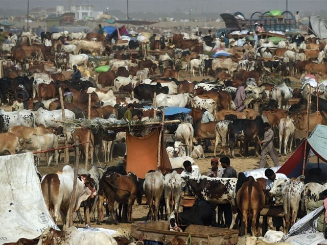 How are we supposed to carry out qurbani considering the rising
